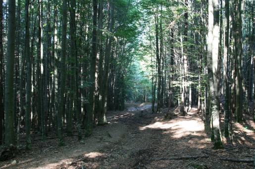 Дорога к полонине Буковец