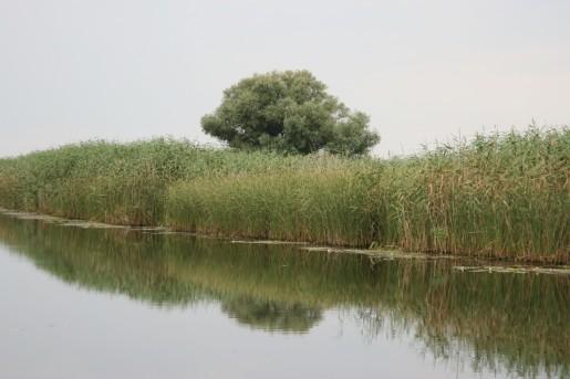 Уровень воды в реке Сула в июле 2011 года