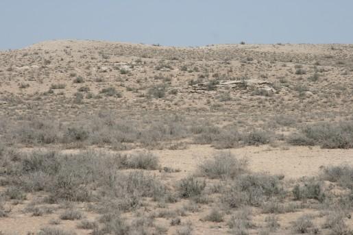 Джейран (род газелей) стоит на камне