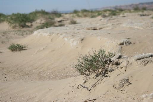 Остатки водорослей