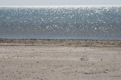 Современный берег Аральского моря