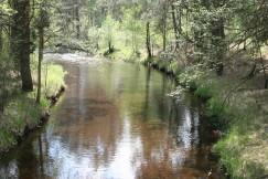 Местами реки имеют земляные берега