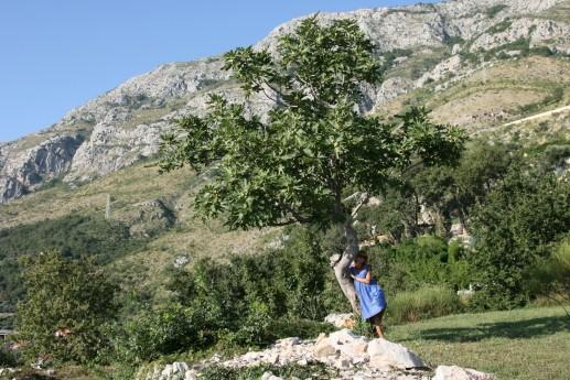 Типичный Черногорский пейзаж