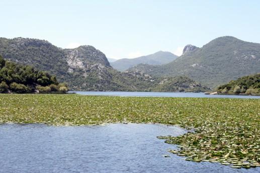 Скадарское озеро, вид с катера
